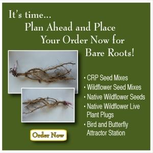 Ion Exchange bare root plants