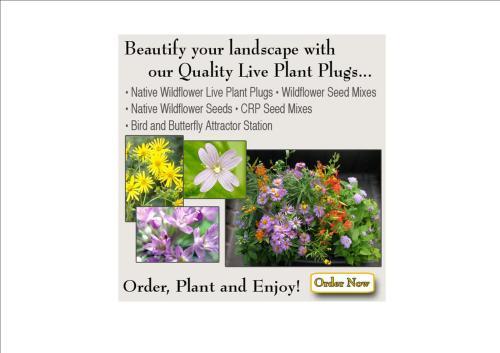 Live Plant Plugs