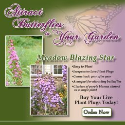Perennial Native Plant Meadow Blazingstar