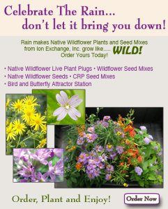 Buy your wildflower plants and seeds now